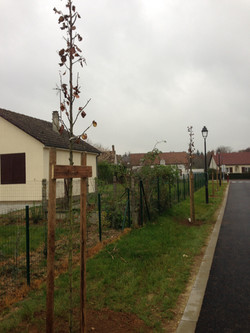 Plantation Varichard