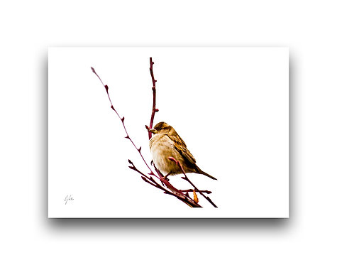 This is Where I Stand - Sparrow