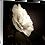 Thumbnail: Shine on Me - Camellia IV