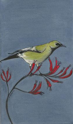 Bellbird+by+Debbie+Porter