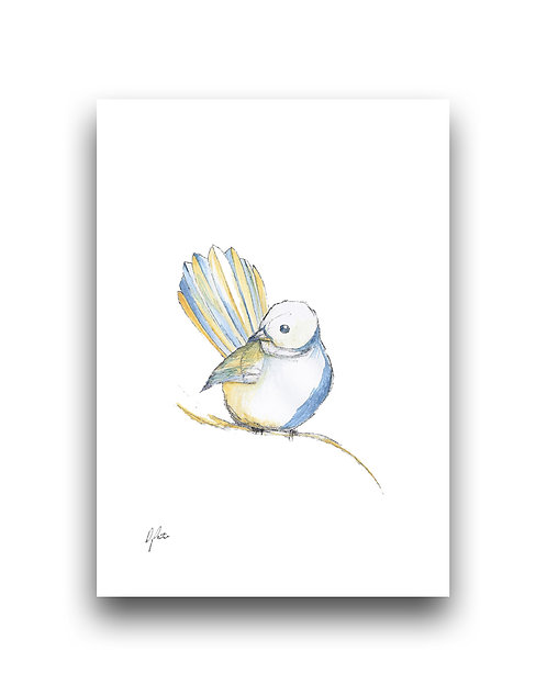 Fantail - Illustration