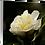 Thumbnail: My Delicate Petals III