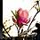Thumbnail: Magnolia × Soulangeana