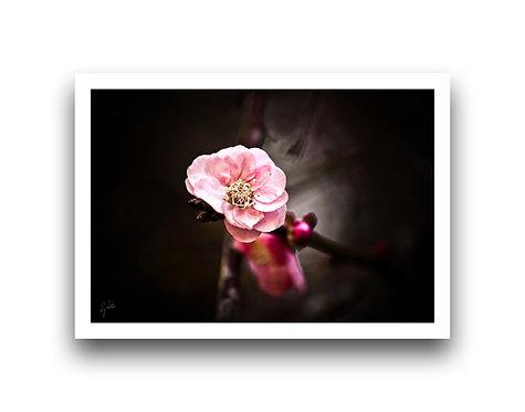 Blossom IV