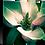 Thumbnail: Intimate - Magnolia