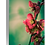 Thumbnail: Japonica Series III - Green