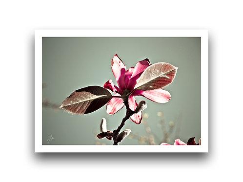 Show Me Your Best Side - Magnolia III