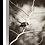 Thumbnail: The Best Perch - Fantail VI