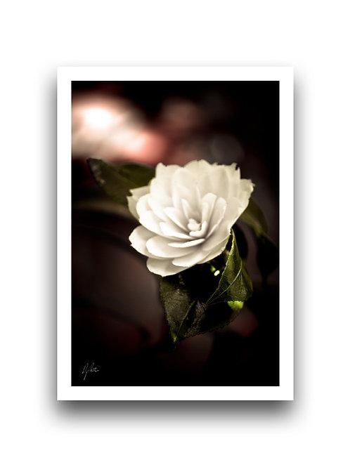 Imperial - Camellia