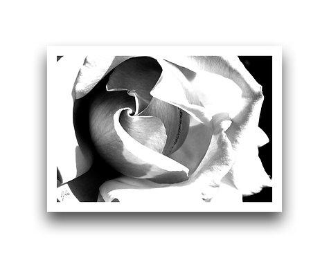 Flora Series VIII
