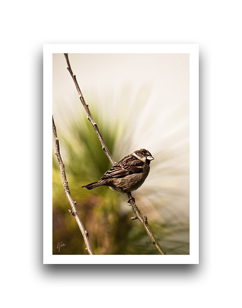 Hello There - Sparrow