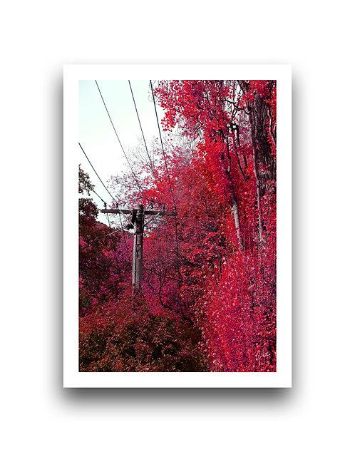 Autumn Vibrancy - Crimson