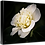 Thumbnail: Camellia