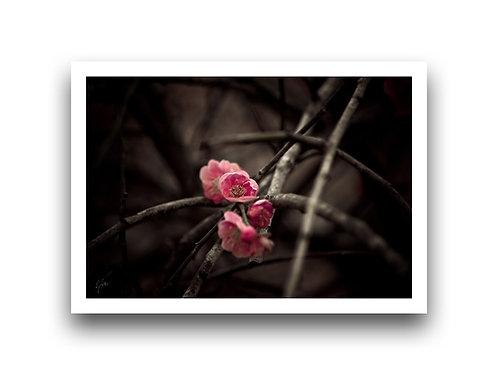 Blossom II