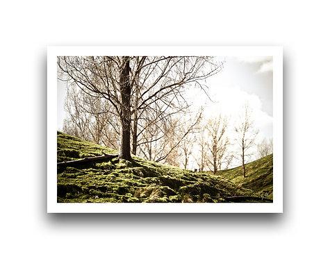 Tree Scape - New Zealand