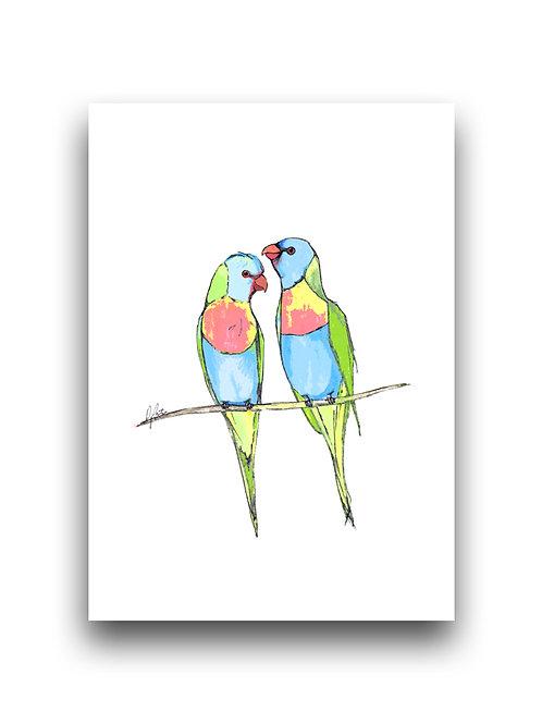 Rainbow Lorikeets - Illustration