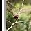Thumbnail: The Best Perch - Fantail III
