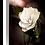 Thumbnail: Imperial - Camellia