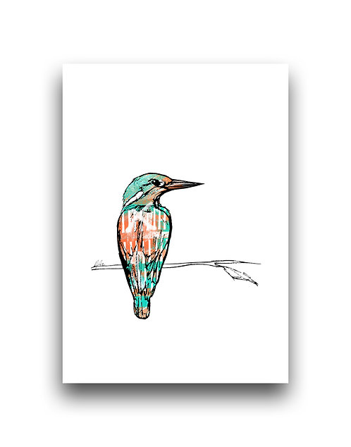 Kingfisher - Illustration