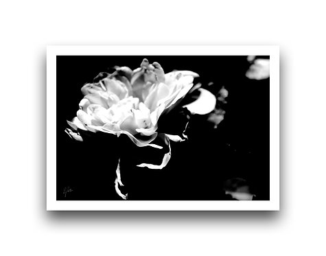 Flora Series VII - Black n' White