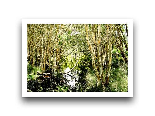 The Wetlands II