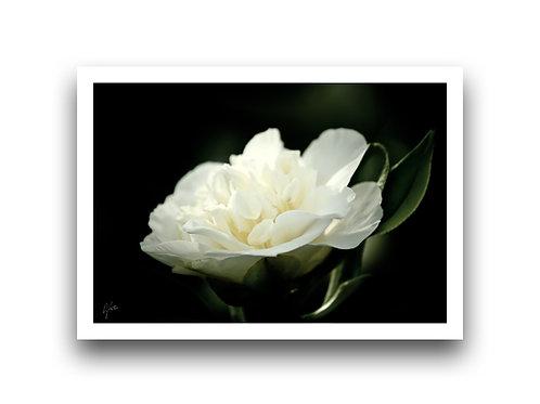 My Delicate Petals