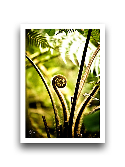 Fond of the Frond