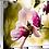 Thumbnail: Magnolia - Inner Workings