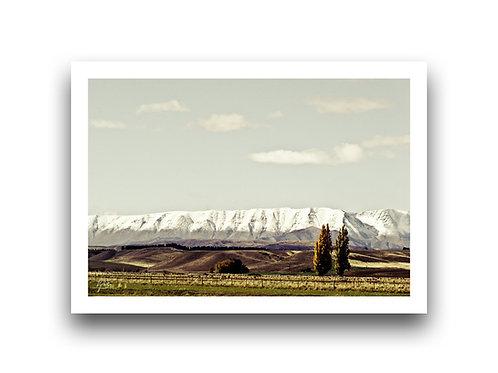 Bronze Otago