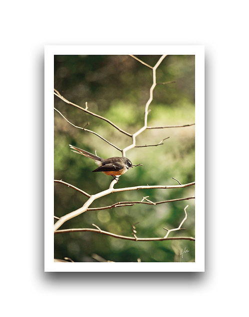 The Best Perch - Fantail III