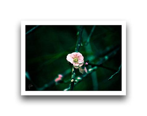 Blossom V