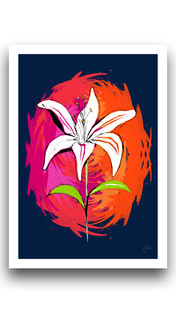 Lily Colour Punch