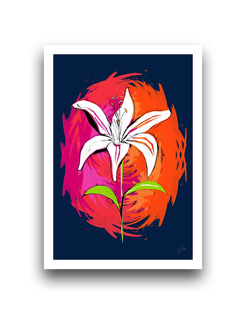 Lily - Colour Punch - Illustration
