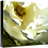 Thumbnail: Flora Series IV