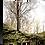 Thumbnail: Tree Scape - New Zealand