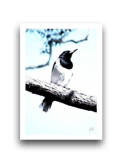 Chin Up - Butcher Bird - Blue