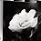 Thumbnail: My Delicate Petals II