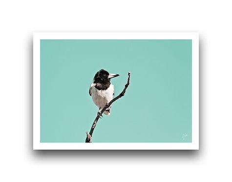 Butcher Bird I