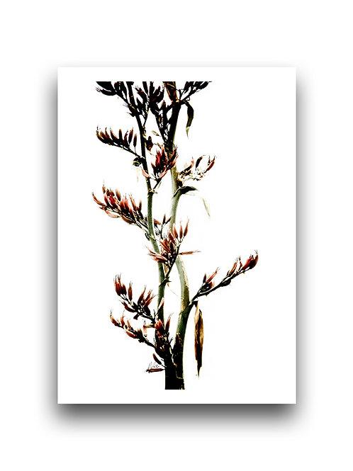 Beautiful Flax Stem