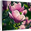 Thumbnail: Saucer Magnolia