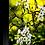 Thumbnail: Apple Blossom