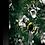Thumbnail: The Bees Knees