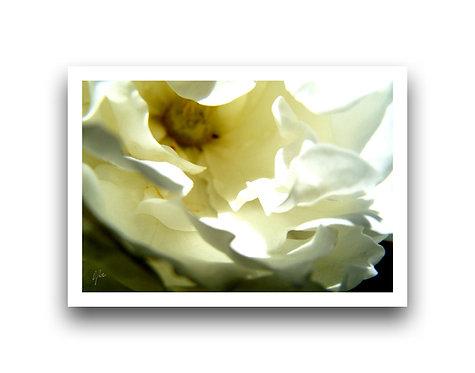 Flora Series IV
