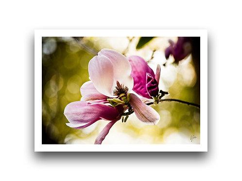 Magnolia - Inner Workings