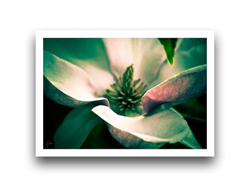 Intimate - Magnolia