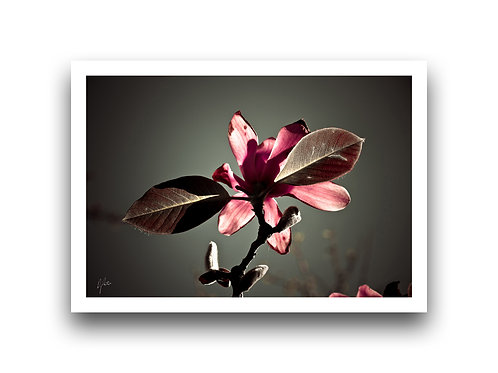 Show Me Your Best Side - Magnolia IV