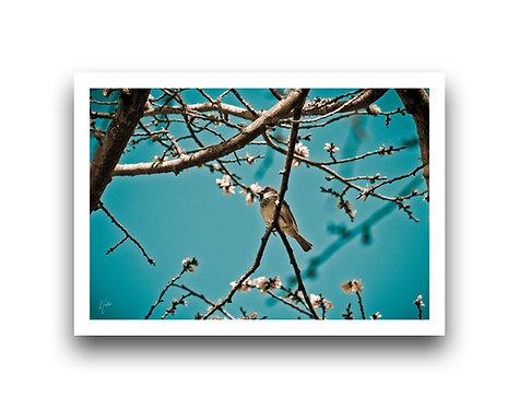 Springtime Sparrow