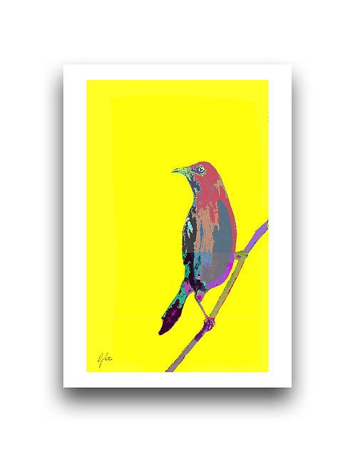 Bellbird - Yellow
