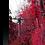 Thumbnail: Autumn Vibrancy - Crimson