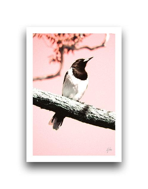 Chin Up - Butcher Bird **Apples & Oranges**